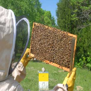 Honey  - Raw Unfiltered - 32oz -