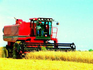 Sustainable Farming: Wheat Harvest has begun