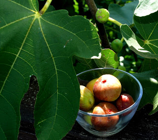 Figs in the South