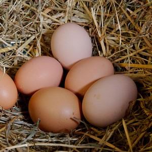 1024x1024_eggs