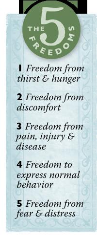 5 freedoms