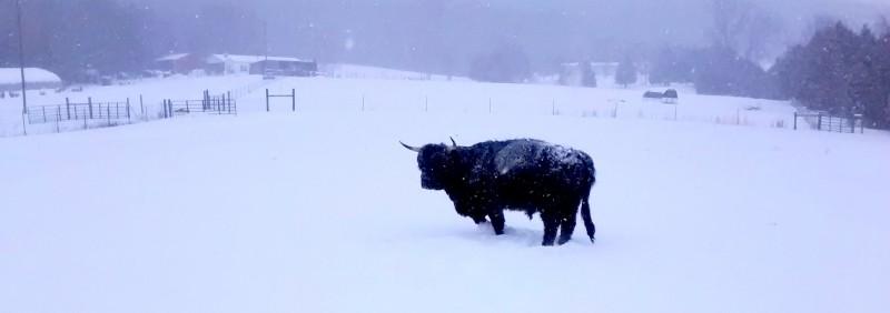 A Snowy Morning on the Farm