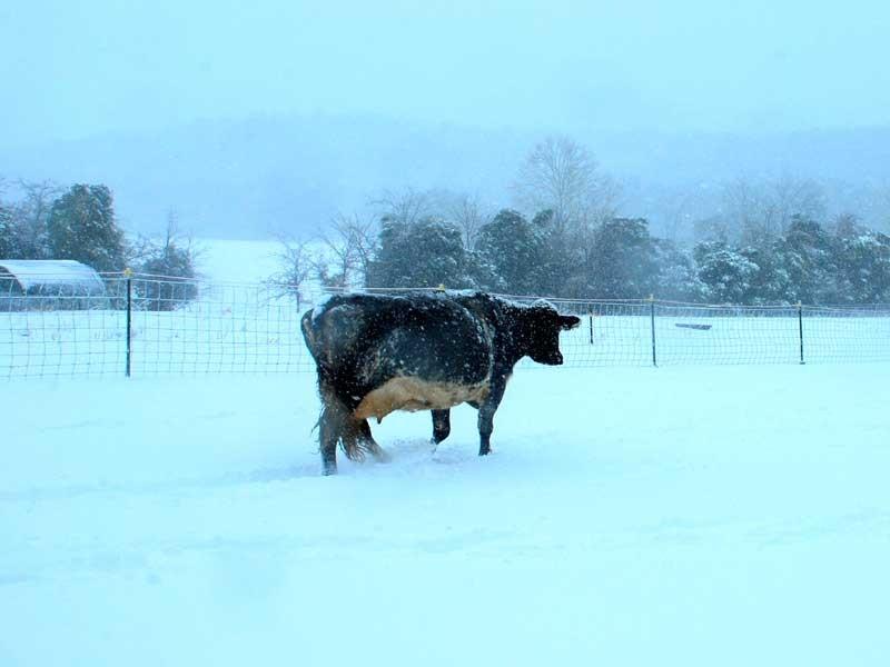 800-x-600-winter-2016-blog-