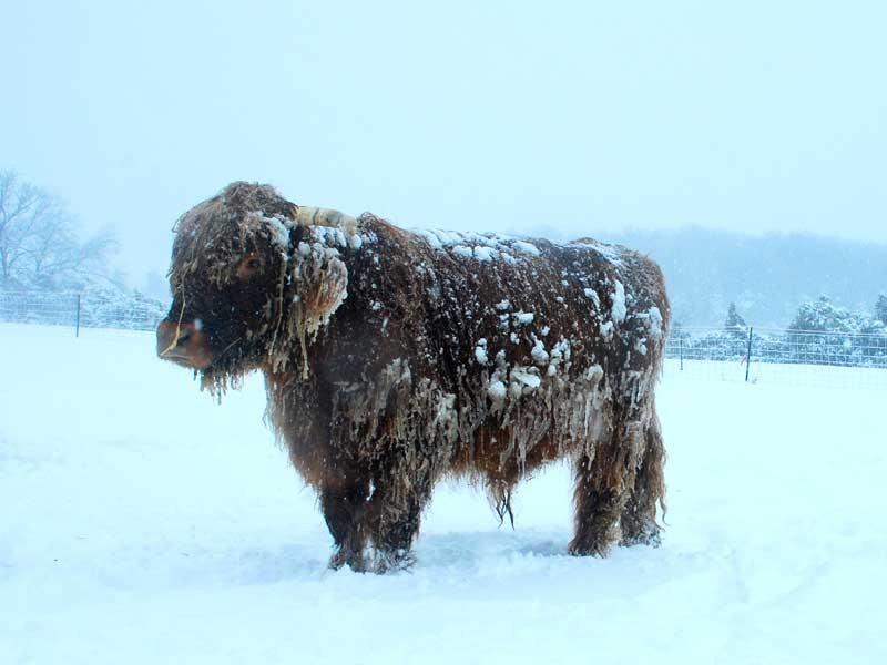 800-x-600-winter-photo-3
