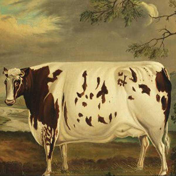 600x600-folkart-dairy-cow