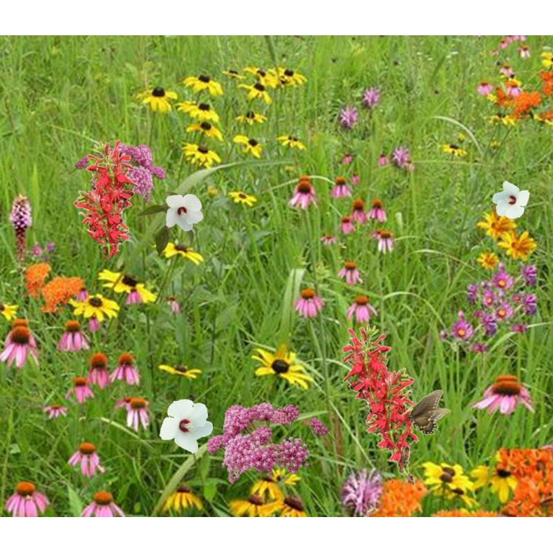 pollinator-conservation-mix